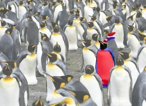 Red Penguin - Memorable or Foolish
