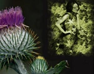 Spiky Thistle-Wallflower