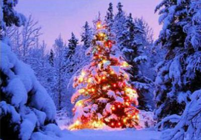 Christmas Tree - Home Page