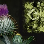 Are You A Subdued Wallflower or a Spiky Thistle?